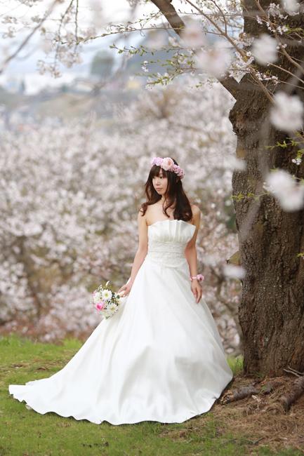 結婚写真 桜ロケ 茅野市
