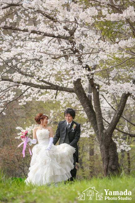 桜ロケ諏訪市