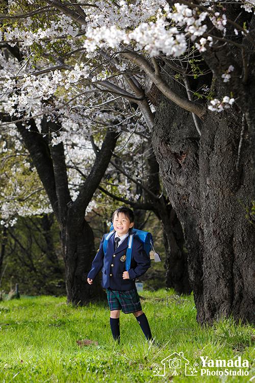 小学校入学桜公園