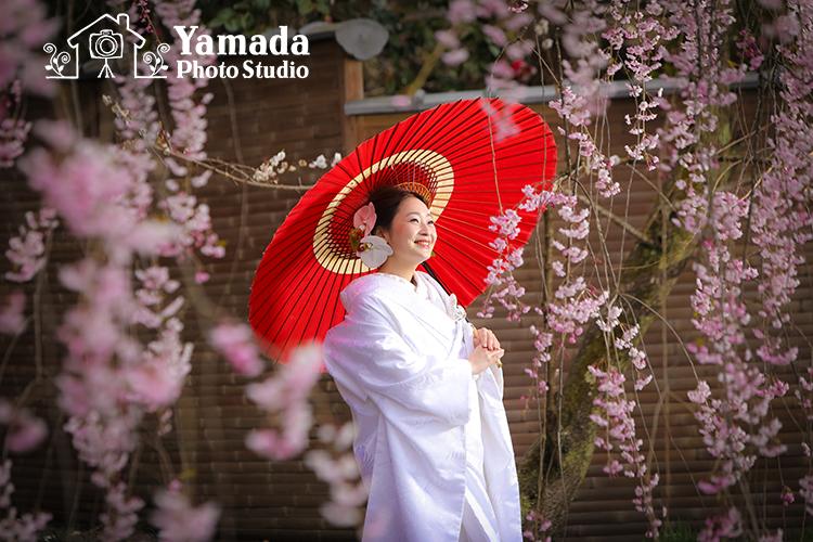 和傘赤白無垢桜ウェディング