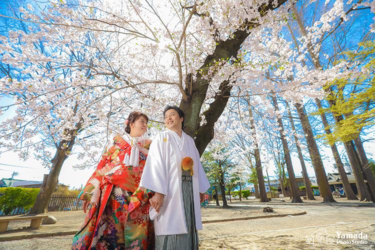 松本城桜和装ロケ