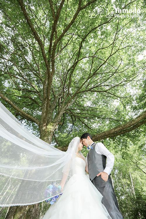 高原結婚写真