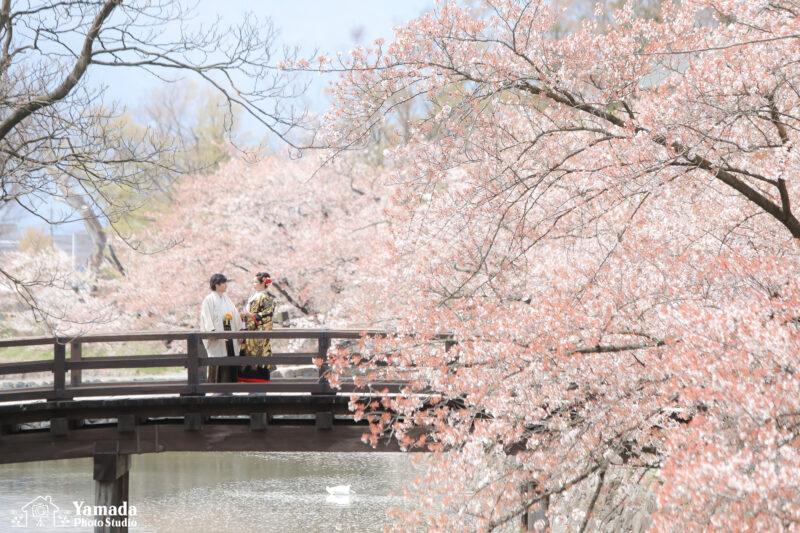 桜ロケ撮影