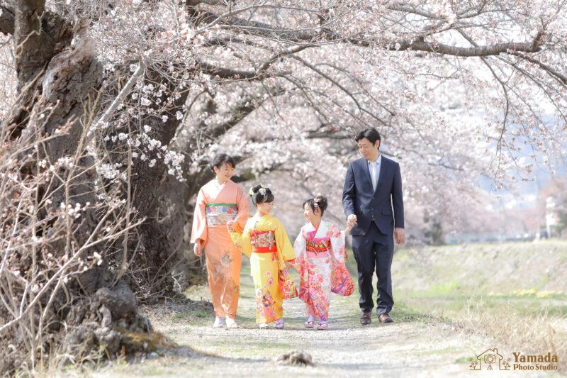 753家族撮影桜ロケ