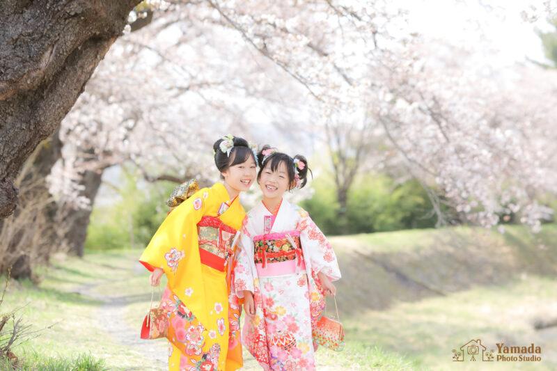 姉妹753桜ロケ