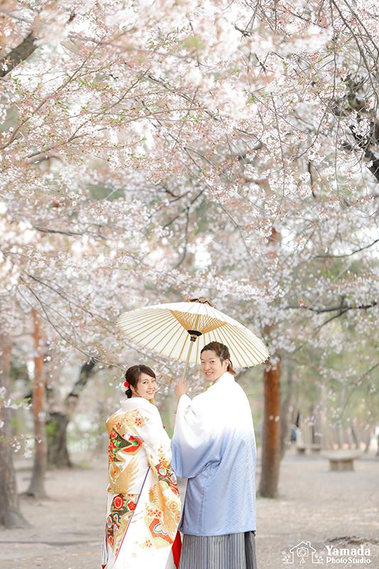 松本城桜ウエディング